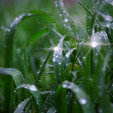 Дъждът…